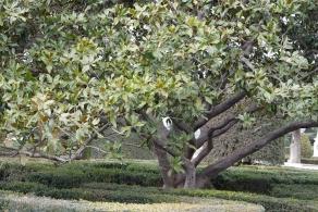 Un árbol
